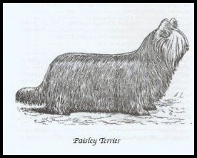 Paysley terrier