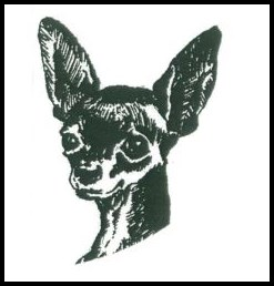 Moscow toy terrier