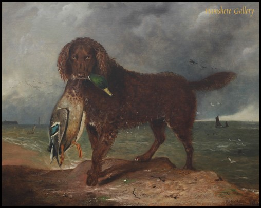 Tweed Water Spaniel